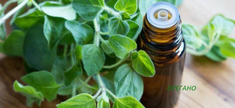масло орегано - полезные свойства