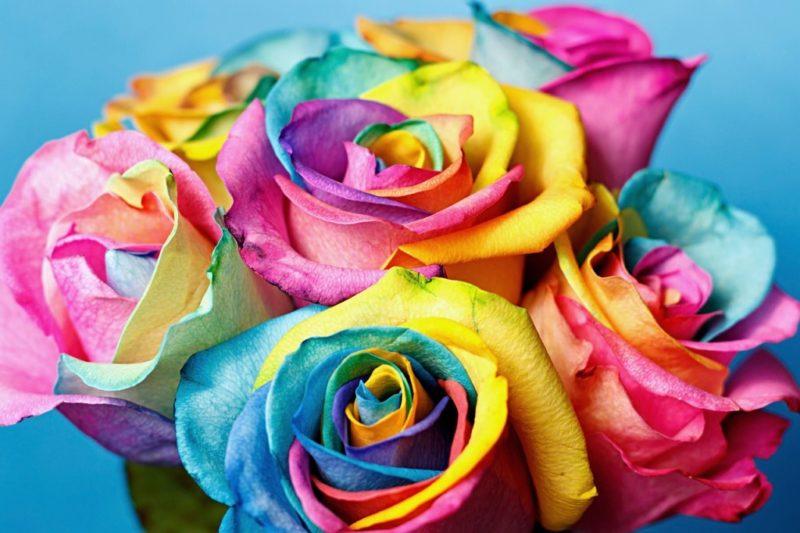 нестандартные радужные розы
