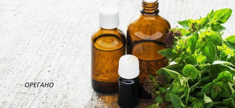 масло орегано в медицине